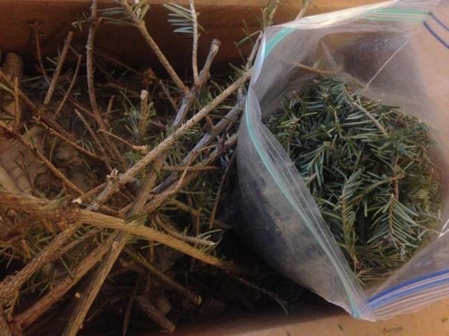 Bagged Balsam Fir Needles