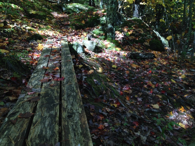 Trail Floor in Fall