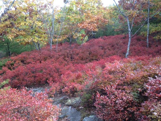 Fall ground cover foliage