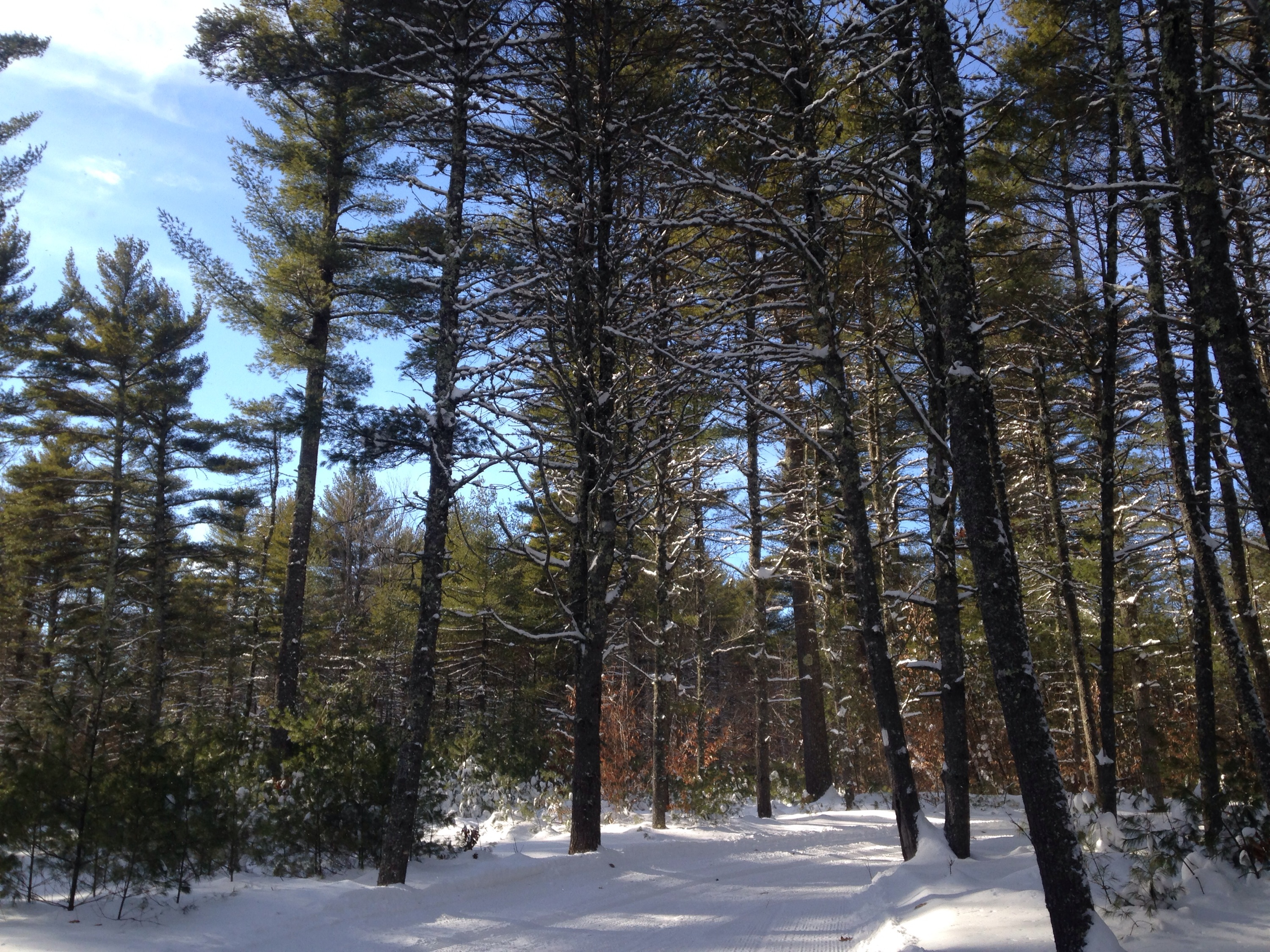 Libby Hill Forest Cross-Country Ski Trails, Gray, Maine